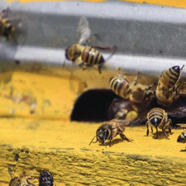 PORR baut Bienen ein Zuhause