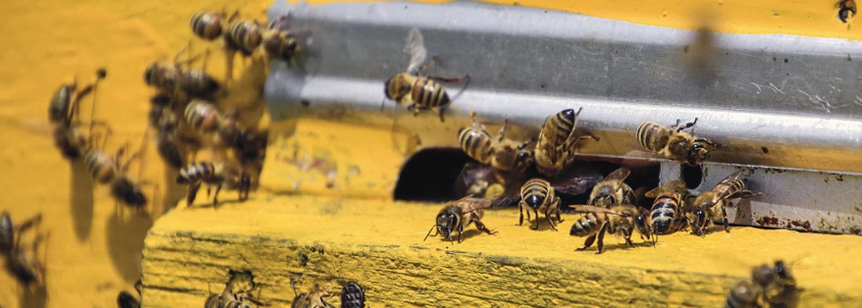ÖGV Neuigkeiten: PORR baut Bienen ein Zuhause